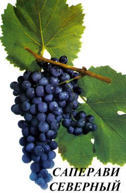Ранний. Ягода средняя, гроздь до 0,3 кг. Технический сорт для приготовления высококачественных соков и темно-окрашенного столового вина. Сахаристость ягод 20,7-25 г/100 мл при кислотности 11,3-6,2 г/л. Можно использовать как краситель. Выдерживает морозы 27-28°С. Обладает повышенной устойчивостью к милдью.